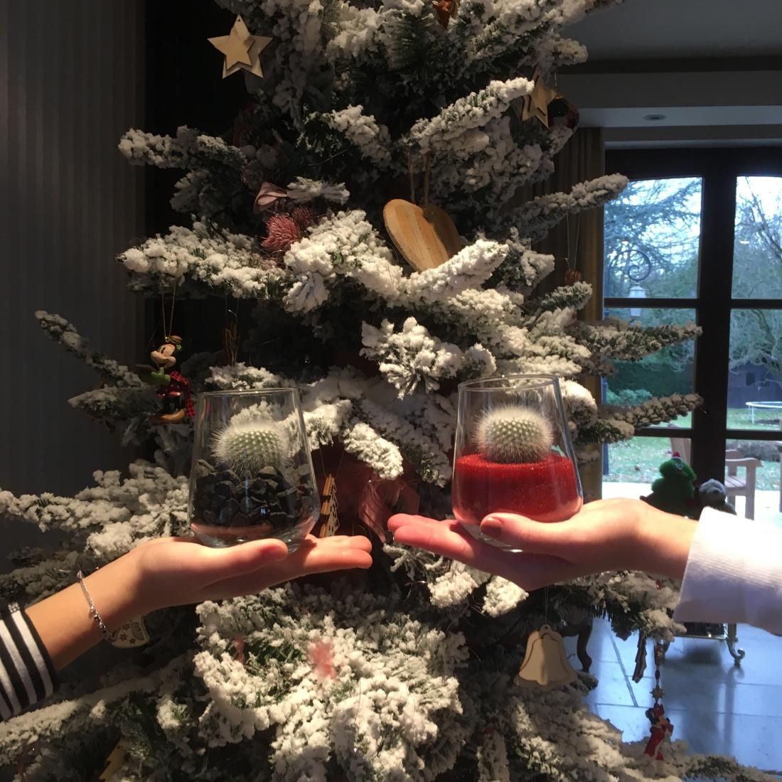 Kerstcactus kerstboom